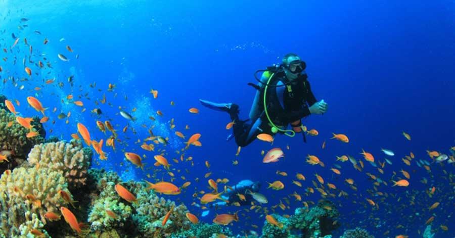 Top 10 world 39 s best dive sites - Best dive sites ...